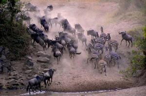 Tanzania, wildebeest migration