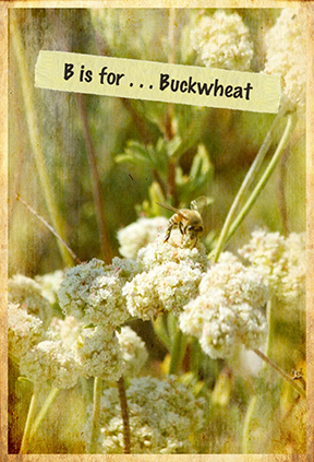 buckwheat and bee