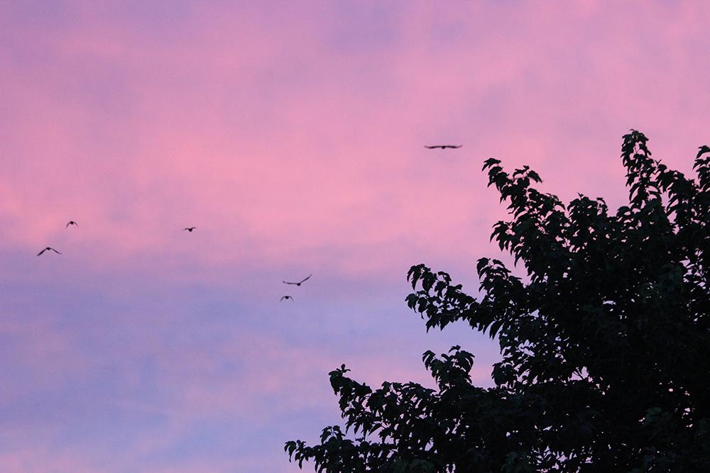 sunrise-IMG_1501