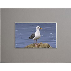 "4"" x 6"" Photo Grey Mat - 2"" x 3"" Window"