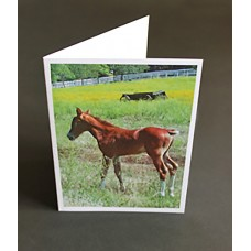 Custom Printed A7 Greeting Cards