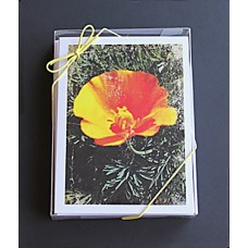 Custom A9 Greeting Card Combo Pack